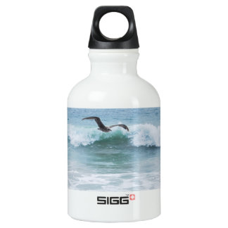 Seagull at the Beach in California