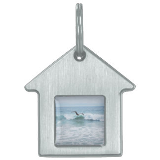 Seagull at the Beach in California Pet Name Tags