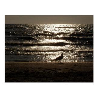 Seagull Bird In Sunset On The Beach Postcard