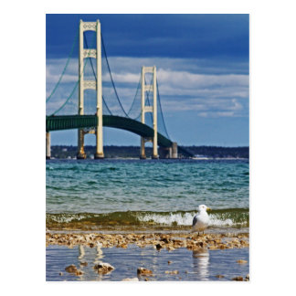 Seagull by Mackinac Bridge Postcard