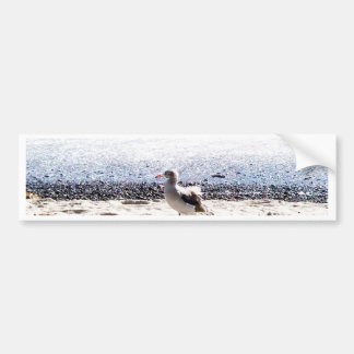 seagull by the ocean on the beach picture bumper sticker