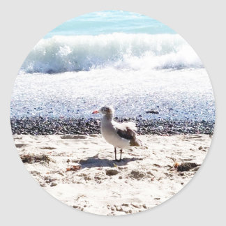 seagull by the ocean on the beach picture classic round sticker