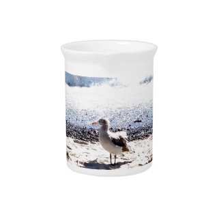 seagull by the ocean on the beach picture pitcher