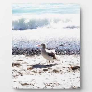 seagull by the ocean on the beach picture plaque