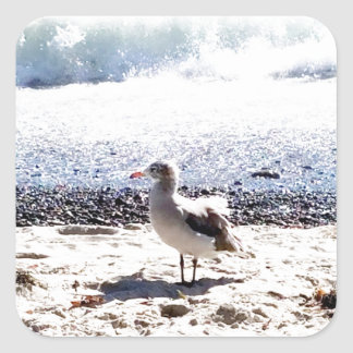 seagull by the ocean on the beach picture square sticker