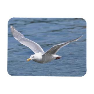 Seagull Cruising over Water Rectangular Photo Magnet