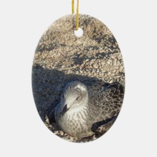 Seagull Enjoying The Sun Summer Photography Ceramic Oval Ornament