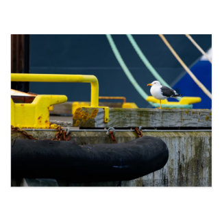 Seagull in an abstract environt postcard