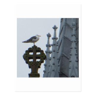 Seagull in Glasgow Postcard