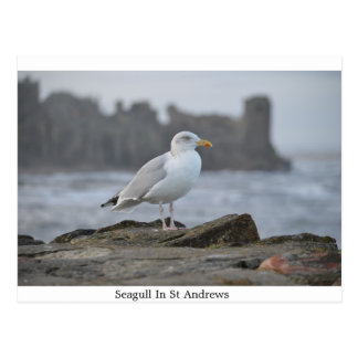 Seagull In St Andrews Postcard