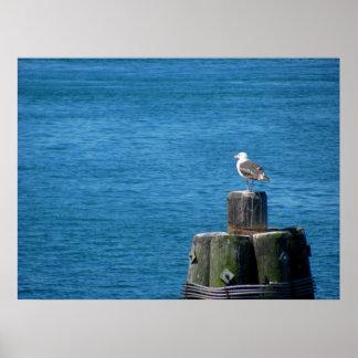 Seagull Looking at Ocean Poster