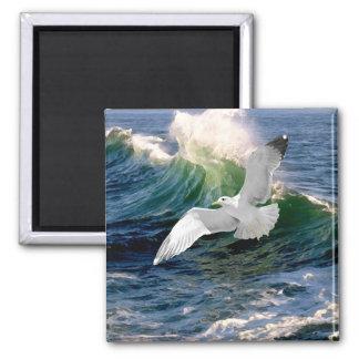 """Seagull"" Magnet"