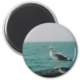 Seagull Magnet