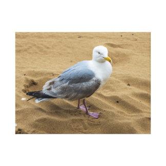 Seagull on a beach canvas print