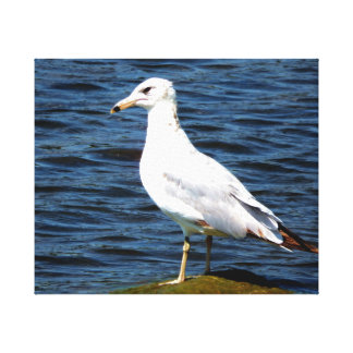Seagull on a mossy stone canvas print