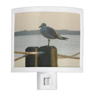 Seagull on a Post Night Lights