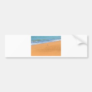 SEAGULL ON BEACH QUEENSLAND AUSTRALIA BUMPER STICKER