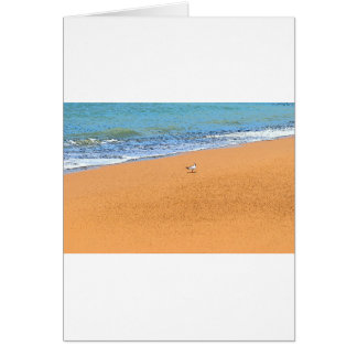 SEAGULL ON BEACH QUEENSLAND AUSTRALIA CARD