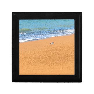 SEAGULL ON BEACH QUEENSLAND AUSTRALIA GIFT BOX