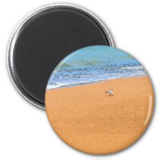 SEAGULL ON BEACH QUEENSLAND AUSTRALIA MAGNET