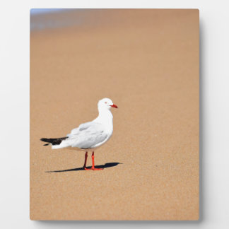 SEAGULL ON BEACH QUEENSLAND AUSTRALIA PLAQUE