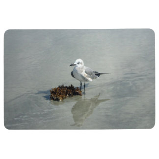 Seagull on Beach with Seaweed Floor Mat
