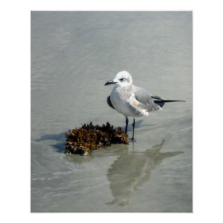 Seagull on Beach with Seaweed Poster