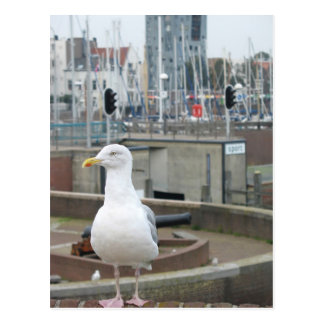 Seagull on brick wall in harbour photo postcard