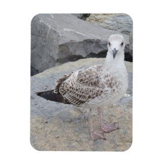 "Seagull on Rocks 3""x4"" Magnet"