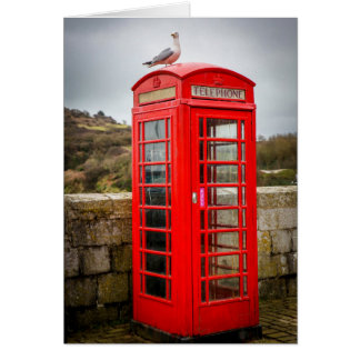 Seagull on Telephone Box Card