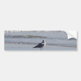 Seagull On The Beach at low tide on east coast Bumper Sticker