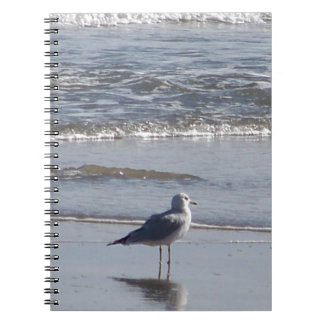 Seagull On The Beach at low tide on east coast Notebook
