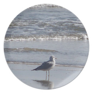 Seagull On The Beach at low tide on east coast Plate