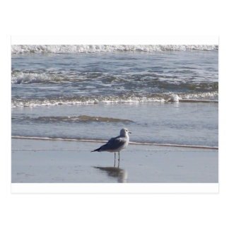 Seagull On The Beach at low tide on east coast Postcard