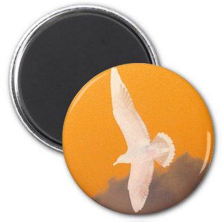 Seagull Orange Magnet