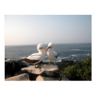 SeaGull Pair On Rocks Postcard
