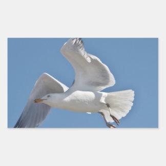 Seagull photo sticker
