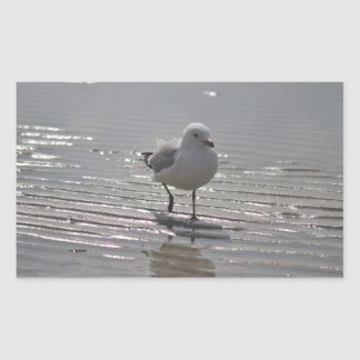 Seagull photo sticker