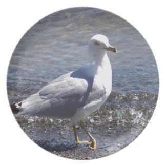 Seagull Plates