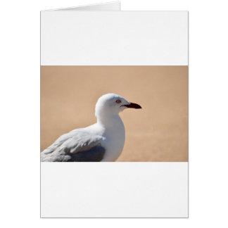 SEAGULL QUEENSLAND AUSTRALIA CARD