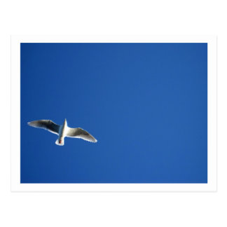 Seagull Seattle Post Cards