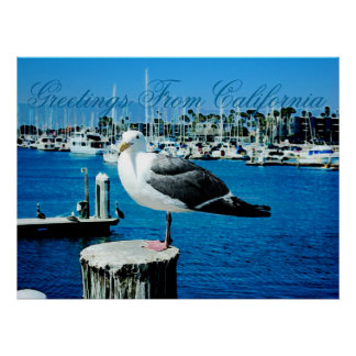 Seagull Shores Poster