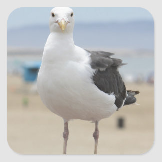 Seagull Square Sticker