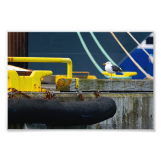Seagull standing on one leg in the colorful Reykja Photo Print