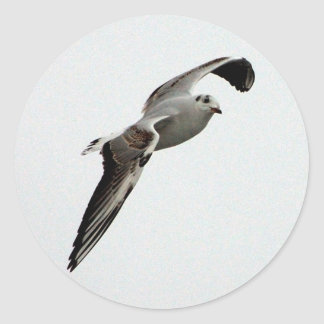 Seagull stickers