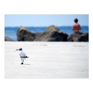 Seagull Stroll Postcard