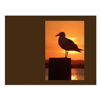 Seagull Sunset Postcard