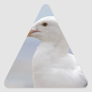 Seagull Triangle Sticker