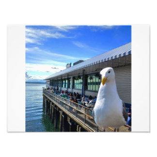 Seagull with attuide photo print