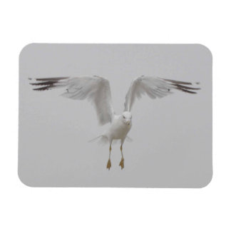 Seagull with Perpendicular Wings Rectangular Photo Magnet